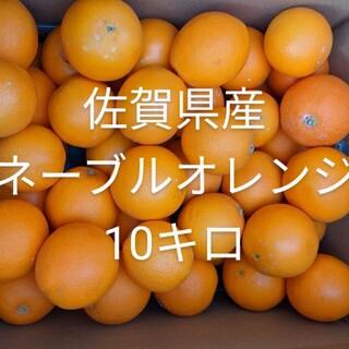 オレンジ10キロ(フルーツ)