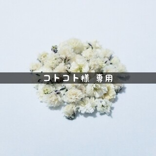 【コトコト様専用】かすみ草のドライフラワー(ドライフラワー)