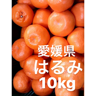 愛媛県 はるみ 大玉 10kg(フルーツ)