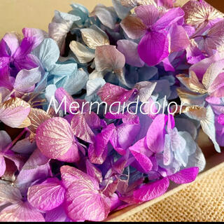 ソフトゆめ紫陽花 マーメイドカラー あじさい ハーバリウム花材(プリザーブドフラワー)