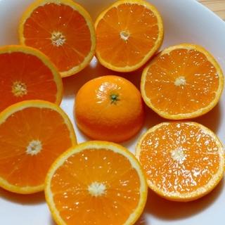 masa様専用 清見オレンジ 小玉 10キロ(フルーツ)