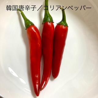 匿12 韓国唐辛子/コリアンペッパー 種子 世界のとうがらし (その他)