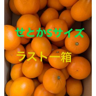 【週末SALE‼️】ラスト一箱早い者勝ち🍊愛媛 せとか S 5キロ(フルーツ)