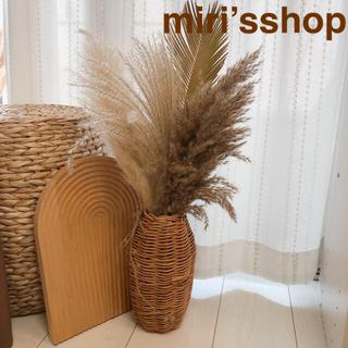 パンパスグラス ヤシの葉セット(ドライフラワー)