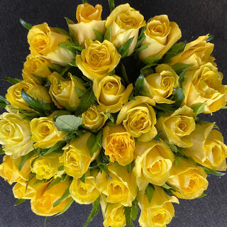 産地直送!バラ・切り花、生花 ゴールドラッシュ(鮮やかな黄色)長さ30㎝ 30本(その他)