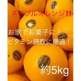 カリフォルニア産 ネーブルオレンジ 約5kg (フルーツ)