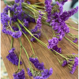 ドライフラワー 花材 スターチス紫(ドライフラワー)