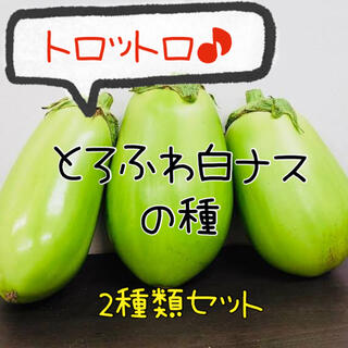 各5粒 白ナスの種 2種類 白丸ナス 白長ナス 夏野菜 種 ふわとろなす(野菜)