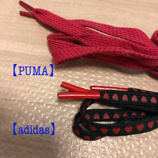 プーマ(PUMA)の【PUMA】【adidas】靴紐 2種類 未使用(その他)