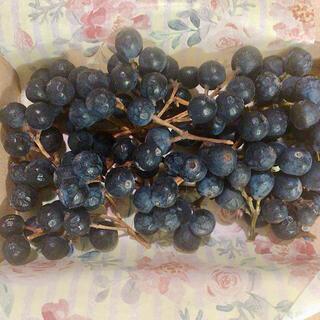 シャリンバイ ドライフラワー 木の実 花材に✳︎送料無料(ドライフラワー)
