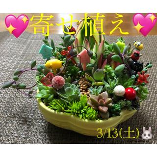多肉植物❤︎寄せ植え❤︎このまま飾れます♪(その他)