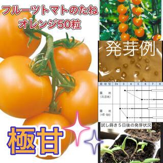 極甘 フルーツトマトの種 オレンジ50粒(その他)