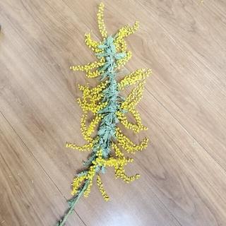 ミモザ 小枝 花 セット(ドライフラワー)