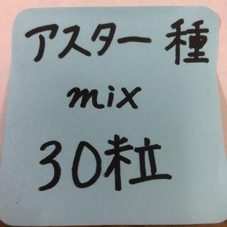 アスター 紫 白 ピンク (桃) 八重咲き 30粒mix今年度取れた種 エゾギク(その他)