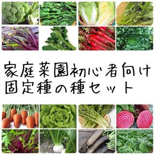 ★伝統野菜★家庭菜園初心者向け固定種の種セット(野菜)