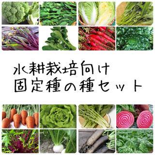 ★伝統野菜★水耕栽培向け固定種の種セット(野菜)