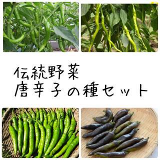 ★伝統野菜★固定種唐辛子の種セット(野菜)