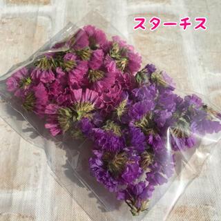 スターチスのドライフラワー紫・ピンク(ドライフラワー)