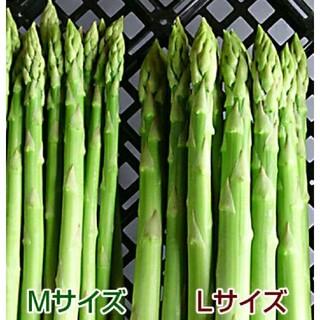 アスパラ 500g アスパラガス 採りたて野菜(野菜)