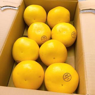 アメリカ産 木熟 メロゴールド8玉(フルーツ)