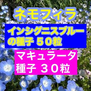 【育て方つき】ネモフィラ インシグニスブルー50粒、マキュラータ30粒。(その他)