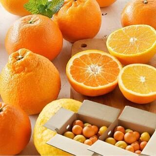 人気の伊藤農園 柑橘 旬 みかん お楽しみ箱 詰め合わせ 福袋(フルーツ)
