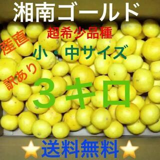 湘南ゴールド3キロ②訳あり♪S・Mサイズ★湯河原産直★超希少品種みかん(フルーツ)