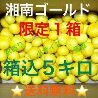湘南ゴールド箱込5キロ③訳ありS・Mサイズ★湯河原産直★超希少品種みかん(フルーツ)