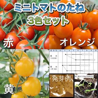 ミニトマトの種 三色セット(その他)