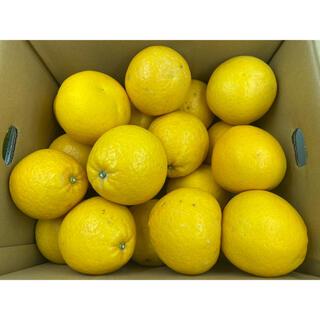 鹿児島県産 サウスオレンジ 2L 約8kg(フルーツ)