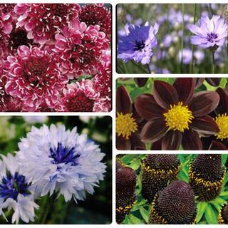 花種5種セット(その他)