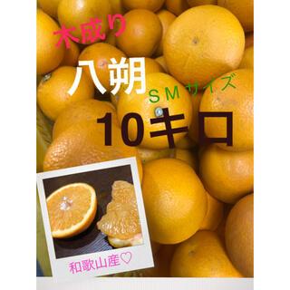 アトム 様専用和歌山県産 有田の木成り八朔SM混合10キロ(フルーツ)