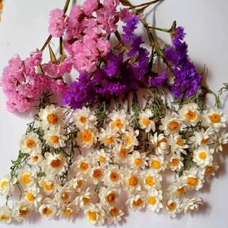 ドライフラワー、花かんざしスターチス(ドライフラワー)