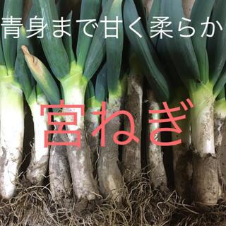 宮ねぎ 80サイズ(野菜)