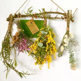 香り立つ無農薬 ミモザとユーカリ・希少ロクアット ローズマリーの木ガーランド(ドライフラワー)