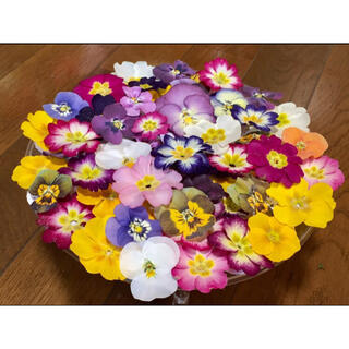 ①  銀の紫陽花が作った彩りビオラ➕ふんわり可愛い春色プリムラ山盛り70冠です(ドライフラワー)