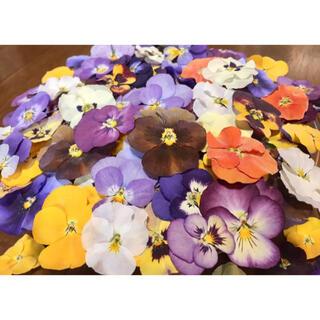 ② 銀の紫陽花が作った彩りビオラのドライフラワー山盛り70冠‼️(ドライフラワー)