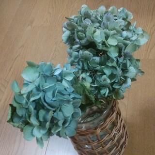 【Earl Gray Tea様確認用】アジサイドライ 青緑~緑青 茎有 小2(ドライフラワー)