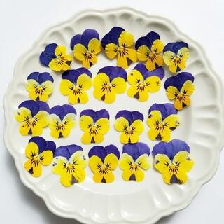 【SALE中】ビオラ  ドライフラワー  (押し花②)  20枚(ドライフラワー)