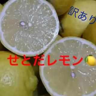 せとだレモン 箱込み10キロ  (フルーツ)
