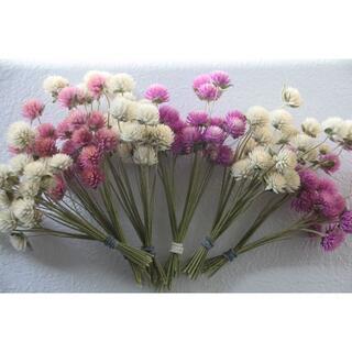 ちびまる様専用 千日紅茎付き4色120本&グラス系ロング花材③&赤系花材C(ドライフラワー)