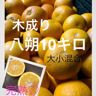 和歌山県産 有田の木成り八朔大小混合10キロ(フルーツ)