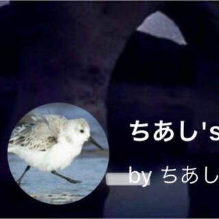 ボークス(VOLKS)のちあし様専用(ぬいぐるみ/人形)