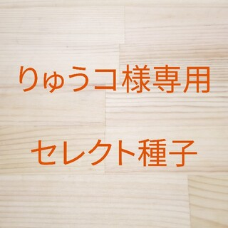 りゅうコ様専用 セレクト種子 2袋(野菜)