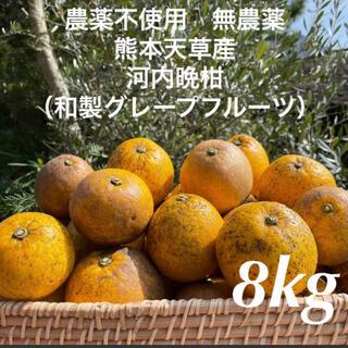 農薬不使用 無農薬 河内晩柑(和製グレープフルーツ)8kg 熊本天草産(フルーツ)