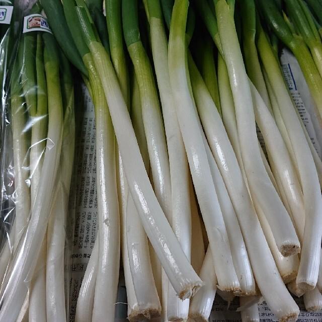 ✳️西田 白ネギ✳️富山県産 西田白ネギ(B品 ) 食品/飲料/酒の食品(野菜)の商品写真