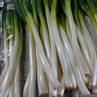 ✳️西田 白ネギ✳️富山県産 西田白ネギ(B品 )(野菜)
