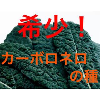 【有機野菜種子オーガニック】カーボロネロ/ブラックケールの種 50粒 家庭菜園(野菜)