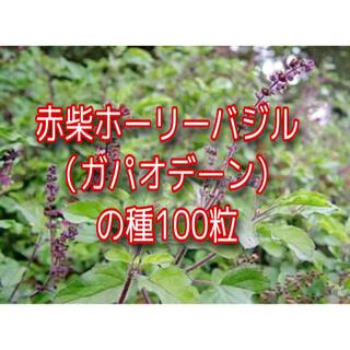 レッドホーリーバジルの種100粒(その他)