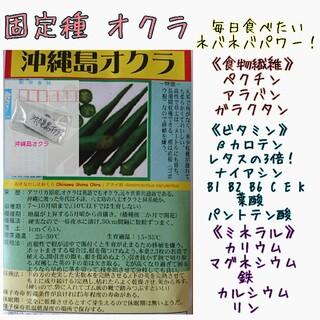 沖縄島オクラ 固定種 野菜の種 ハーブの種 水耕栽培 家庭菜園(野菜)